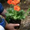 Verkoop beplantingen-.jpg